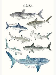 """Sharks"" Framed Art Print by AmyHamilton   Redbubble Art Mural, Wall Art, Framed Art, Wall Decor, Shark Drawing, Shark Art, Canvas Prints, Art Prints, Illustrations Posters"