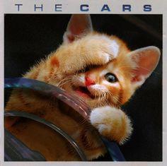 Favorite meme of the day - Kitten Covers.