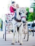 A Horse Carriage Proposal