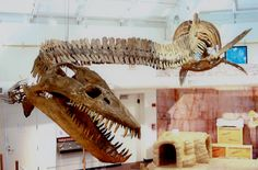 Elasmosaurus is a genus of plesiosaur with an extremely long neck that lived in the Late Cretaceous period, million years ago. Reptiles, Mammals, Dinosaur Fossils, Dinosaur Crafts, Creatures 3, Dinosaur Skeleton, Anthropologie, Extinct Animals, Prehistoric Creatures