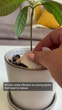 Growing Vegetables, Growing Plants, Planting Succulents, Planting Flowers, Household Plants, Fertilizer For Plants, Inside Plants, Plants Are Friends, Plant Health