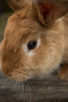 Here is a collection of information on raising meat rabbits in a colony. Colony rabbits live in group housing and are free range rabbits. Raising Rabbits For Meat, Meat Rabbits, Funny Animal Memes, Funny Animals, Cute Animals, Small Animals, Indoor Rabbit, Rabbit Pictures, Pet Clinic