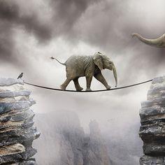 Animals Canvas Prints - Baby Elephant Canvas Print by by Sigi Kolbe Baby Elephant Walk, Elephant Canvas, Elephant Love, Elephant Pics, Elephant Quotes, Elephant Artwork, Elephant Quilt, Elephants Photos, Elephant Trunk
