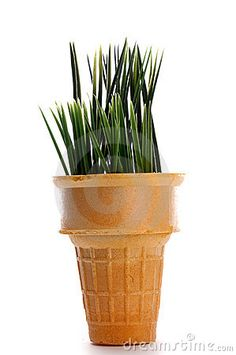 grow grass in a cone on Tu B'Shevat or parsley for Pesah