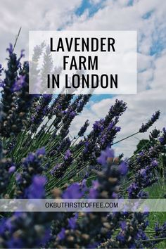When you think about a big city what do you picture yourself? Probably a lot of commercial and residential buildings, shops, monuments and some parks. What I love about London is that you can have such amazing places as lavender farms right in the city! Yes, it's not in the centre, but still not that far away!