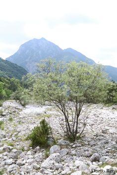#parconaturale #prealpigiulie #friuliveneziagiulia #montagne #mountains #natura #nature #italy #canon #fotografia #photography #photoshop #focus #alberi #tree #flora #sassi #stones