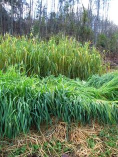 When to plant winter cover crops