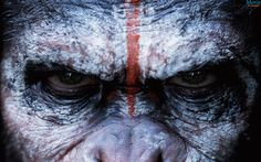 Apes again dominate the box office Hollywood Pinterest Box