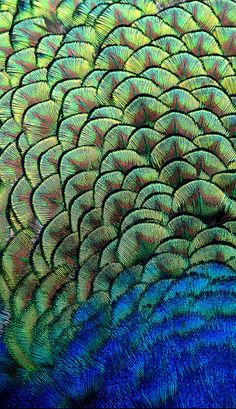 Peacock Feathers by paulridley - Paul Ridley Peacock Art, Peacock Feathers, Peacock Colors, Green Peacock, Peacock Pattern, Patterns In Nature, Textures Patterns, Organic Patterns, Print Patterns