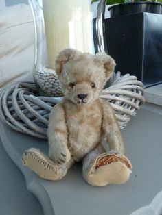 My Steiff Teddybear 1955