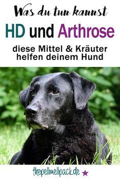 HD und Arthrose beim Hund -- diese Mittel und Kräuter helfen | thepellmellpack.de