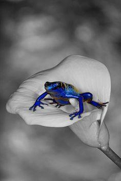 Blue Prince Charming