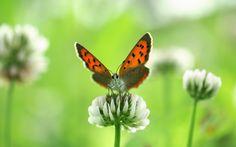 butterfly wallpaper pack 1080p hd