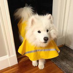 Wish I were putting on my snow booties instead of my rain coat...