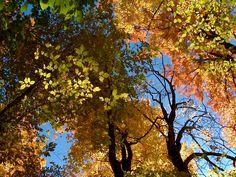Raise a pint, toast the foliage at fall festivals