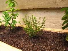 Herbalicious long planter box for kitchen essential herbs, awesome idea again from the Borrowed Abode