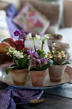Discover the wonderful world of miniature orchids! In this article by Ryan Levesque, author of Orchids Made Easy, you'll learn about some popular minis. Orchids Garden, Orchid Plants, Mini Plants, Indoor Plants, Mini Orquideas, Miniature Orchids, Pot Plante, Orchidaceae, Arte Floral