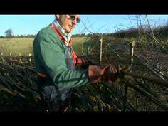 N...nettles, naked gardening, water lilies The A To Z Of Gardening Episode 14 - YouTube