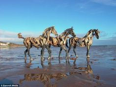 3. At the beach... stunning life-size horse sculptures made out of driftwood