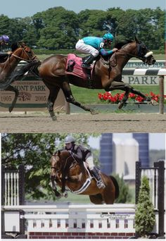 Mustang Ranch (top) wins at Belmont Park. Adam Coglianese photo  The very same Mustang Ranch (bottom), now named Truth Be Told, takes a fence under owner Pam Nealer. (Vidal Photography)       Love OTTBs - they can do anything!