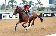 Summerhill Race Results: Greyville Polytrack 08/03/15 Race 4: MR 86 DIVIDED HANDICAP Open 2000m  Winner: DOUBLE CLUTCH  Stronghold (GB) x Incremental (Northern Guest (USA)) Bred By: Mr D K Martin.   Owner: Mr A L Williams.  Trainer: P V Lafferty  Jockey: Keagan De Melo   Gold Circle Photo  www.summerhill.co.za