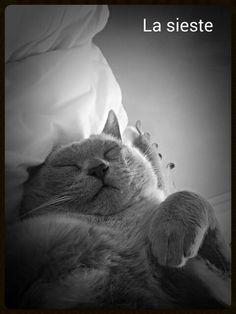 Sleeping Lulu