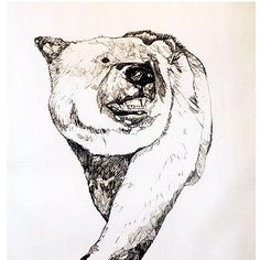 Bear Drawing