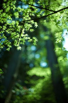 Green leaves. I love the simplicity of this photo. Beautiful.