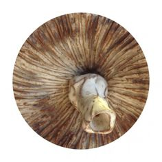 Circle - Ceramic 9 - Random Series - Diane Manton - January 2014