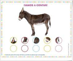 """Proyecto de Educación Infantil de 3 años """"El burro"""" (Colección """"¡Me interesa!"""" de Editorial Algaida) Burritos, Donkey, Movie Posters, Editorial, Kids, Google, Teaching Resources, Body Parts, Classroom"""