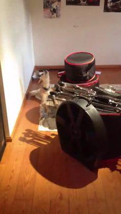 Pupper has a wonderful singing awoo http://ift.tt/2jj1qpa