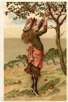 Vintage Apple Picking Image...for bookplate