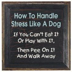 word of wisdom from the dog