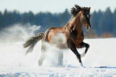 "equestrian-vibes: ""♡ na We Heart It. """