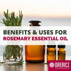 Want to know some important rosemary essential oil uses? Rosemary essential oil uses and benefits have been known in folk medicine for thousands of years!