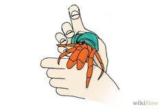 Hand Feed a Hermit Crab Step 4.jpg