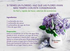 Conservador para flores naturales