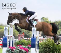 Got a showjumper for sale? Selling on Bigeq.com is simple and effective! Try it.  This is Hilary McNerney and Charlie showing classic form over this oxer! #bigeq #hunterjumper #showjumper #showjumping #ushja #usef
