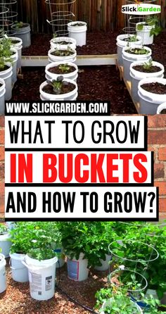 What Vegetables You Can Grow In Buckets And How To Grow In Buckets. Here in this post, I will explain how to grow in buckets and what to grow in buckets but first, watch the interview of this couple who build a movable garden. Backyard Vegetable Gardens, Veg Garden, Vegetable Garden Design, Lawn And Garden, Porch Garden, Growing Vegetables In Pots, Container Gardening Vegetables, Container Plants, Vegetables Garden