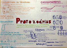 Resumo Protozoários