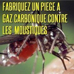Au lieu de repousser les moustiques, attirez-les ! Mais vers vos pièges sélectifs Le bon vieux Culex pipiens d'antan, qui attaquait seulement à la tombée du jour, a reçu le renfort du moustique tigre, Aedes albopictus, dans un nombre de département croissant....