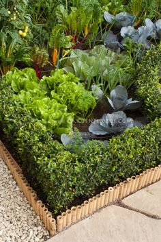 Vegetable Garden Border Ideas garden design with diy landscape border outside ideas pinterest landscape with raised garden bed plans from Blue Cabbage Rainbow Chard Tomatoes Boxwood Edging And Other Vegetables In A