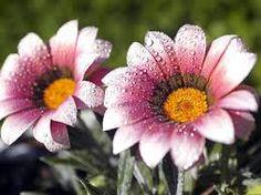 flores raras - Pesquisa do Google