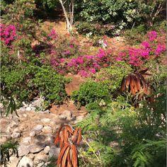 Botanical Garden, Kona HI