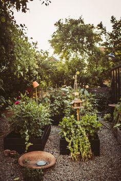 Garden Pots, Potted Garden, Garden Ideas, Outdoor Spaces, Habitats, Outdoor Gardens, Sustainability, Balcony Ideas, Table Decorations
