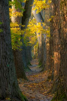 "small path on the ""oberer Wöhrd"" in Ratisbon, Bavaria, hidden between the ""Wöhrdbad"" and the ""Dultplatz"" by Tobias Becq on 500px. Trees Autumn Nature Paths"