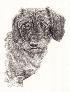 illustratie teckeltje, Potlood tekening van hond in grafiet door Dyenne Nouwen