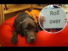 Meet the dog that can read