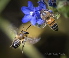 Mike's Spot - Creativity through Exploration: Two Bee - by Mike Busby Photography