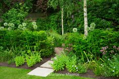 Large Wimbledon Garden   Charlotte Rowe Garden Design
